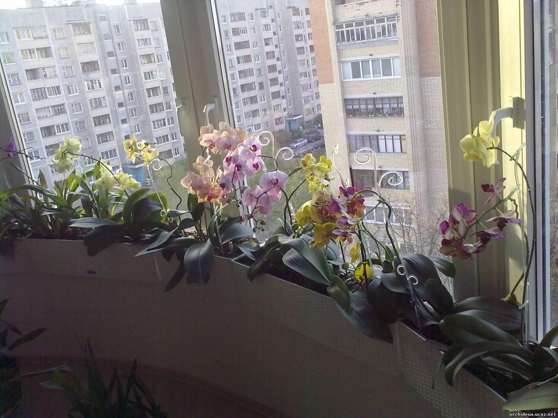 Организация орхидного хозяйства - страница 12 - форум орхиde.